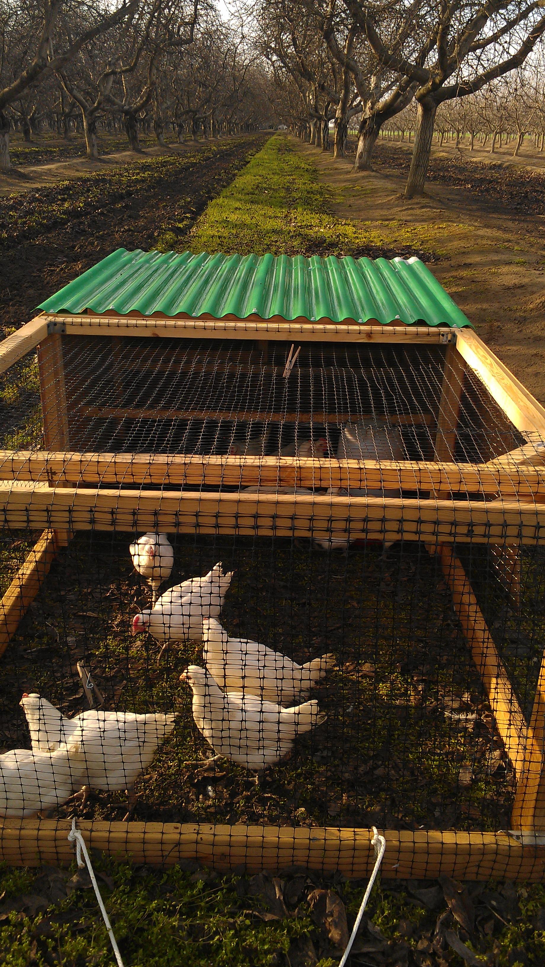 American Bresse Adventures - Sunbird Farms