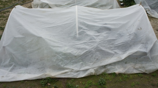 Covered Hoop House