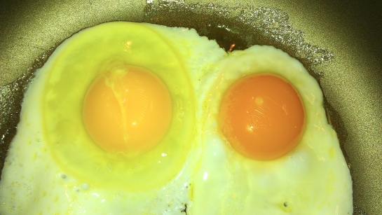 Can You Tell Which Is The Certified Organic, Cage-Free Egg?