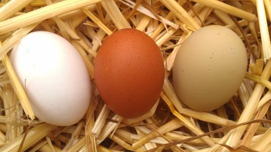 Breda, FBCM and Blue Isbar eggs.